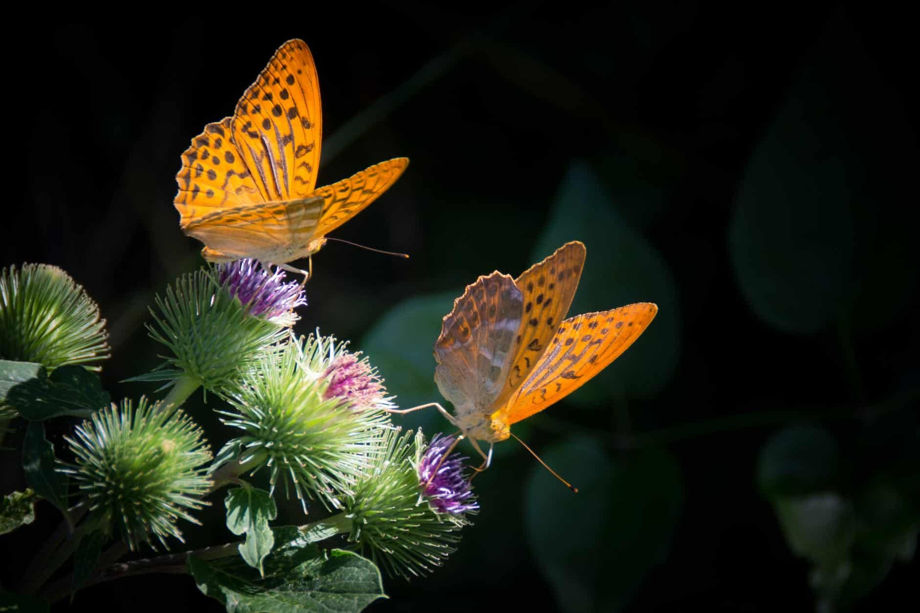 amazing facts about butterflies for childrens